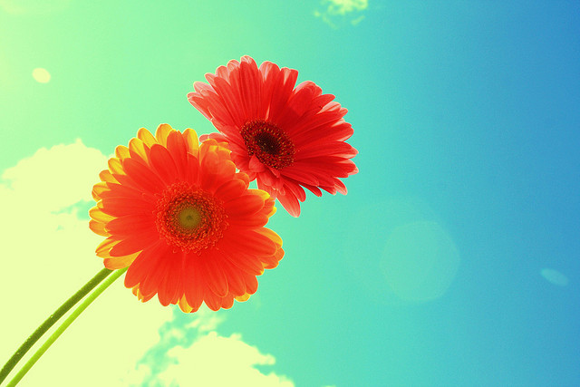 Image credit: Forever and Always Two Bright Flowers on Blue Sky by Pink Sherbet Photography, CC BY