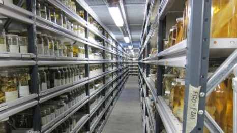 Collections form the fundamental basis for further research! (Source)